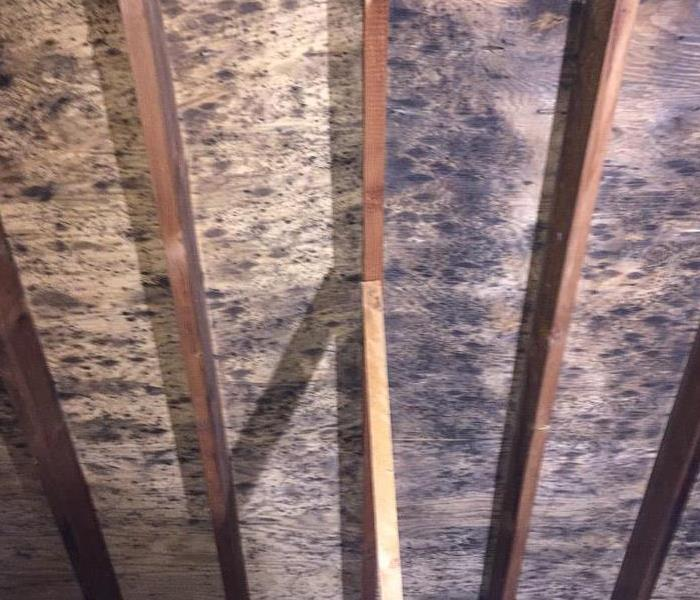 Mold Found in Attic Before